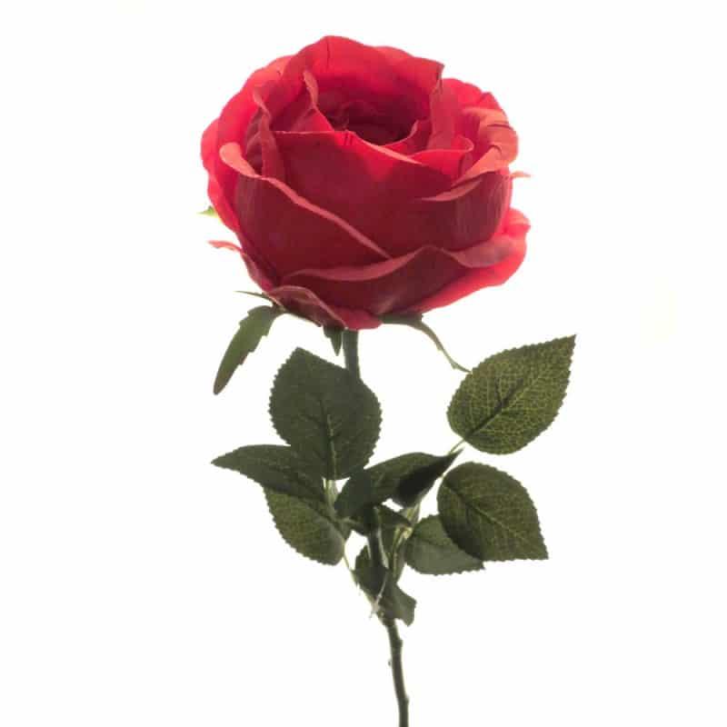 Роза Престиж шиповник красная 68 см