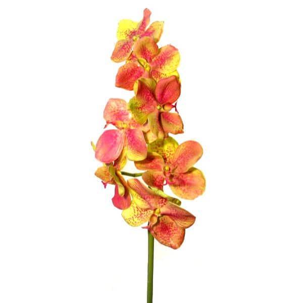 Орхидея Ванда зелено-розовая 86 см