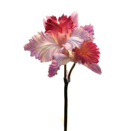 Орхидея Каттлея 50см фиолетовая
