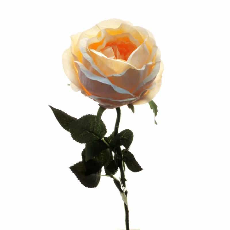 Роза Престиж шиповник розовая 68 см