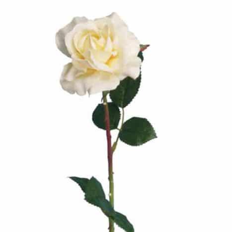 Роза Счастье кремово-желтая 60 см