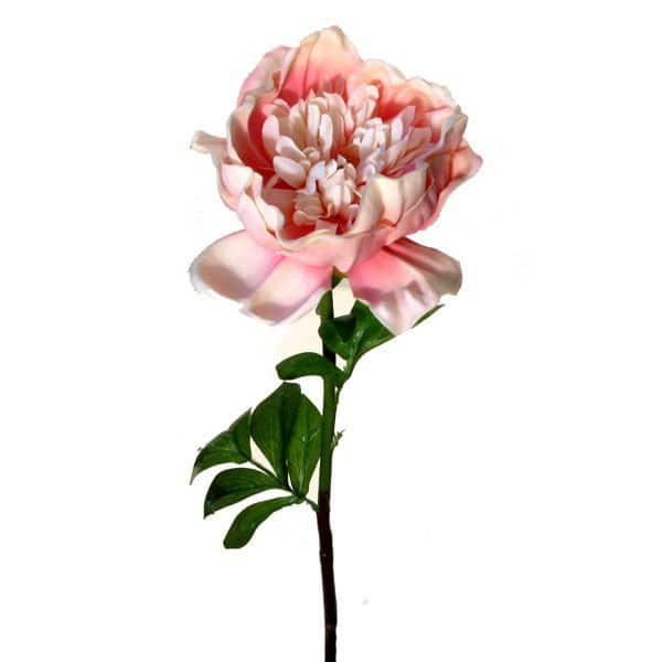 Пион розовый 75 см